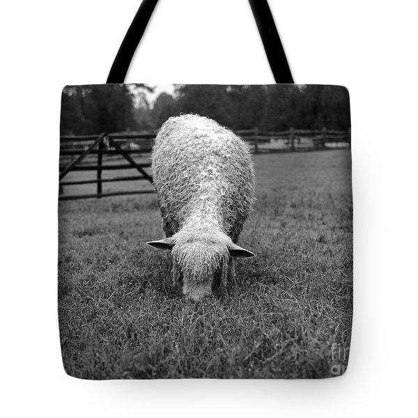 Longwool Sheep Grazing Tote Bag
