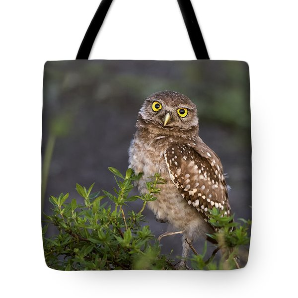 Look Who Is Up Early Tote Bag