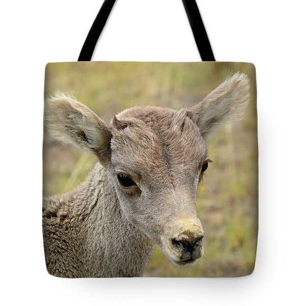Tote Bag featuring the photograph Looking At You Kid by Bruce Gourley