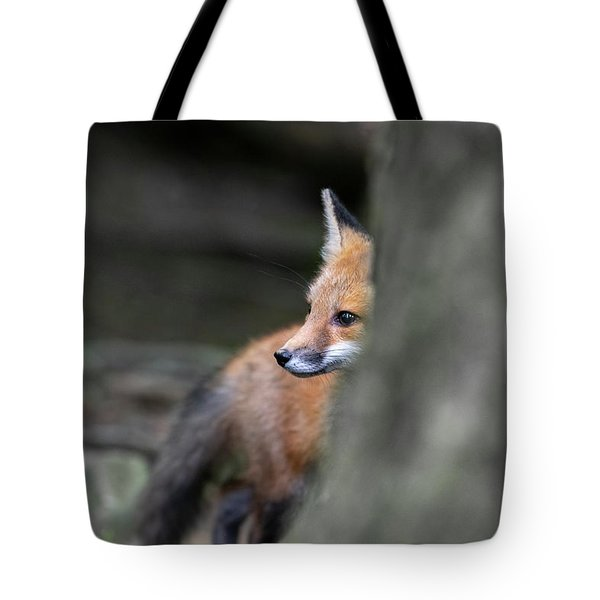 Tote Bag featuring the photograph Looking Behind A Tree 2 by Dan Friend