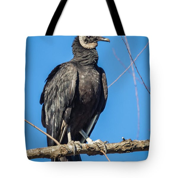 Tote Bag featuring the photograph Looking For A Fresh Kill by Gregory Daley  PPSA