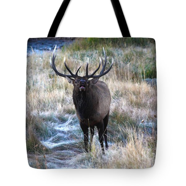 Looking For A Showdown Tote Bag