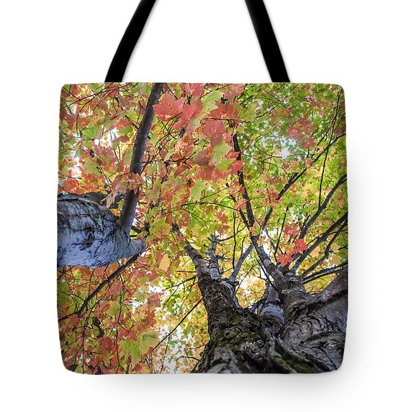 Looking Up - 9670 Tote Bag by G L Sarti