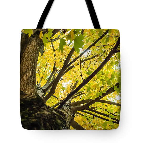 Looking Up - 9676 Tote Bag
