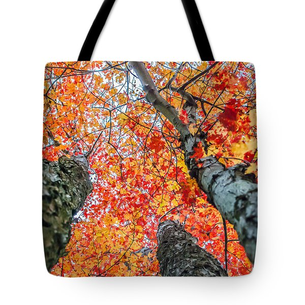 Tote Bag featuring the photograph Looking Up - 9743 by G L Sarti