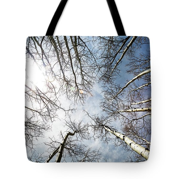 Looking Up On Tall Birch Trees Tote Bag