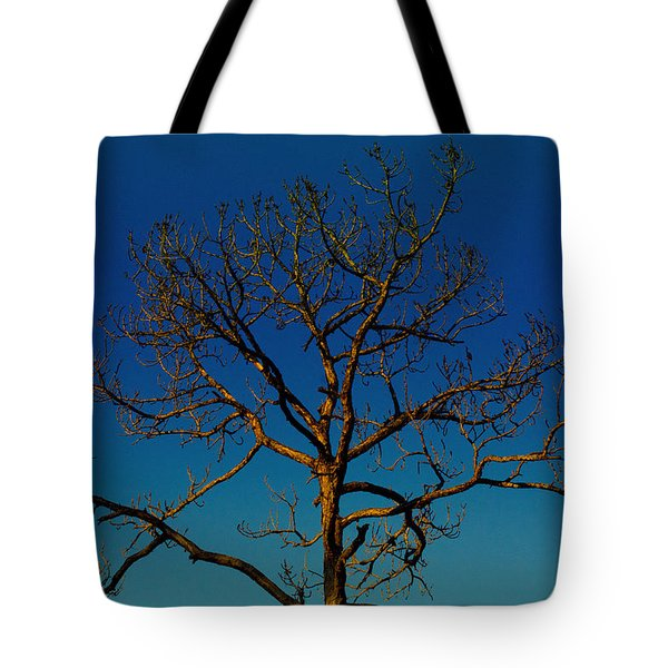 Looking Up, Sunrise, Myakka State Forest Tote Bag