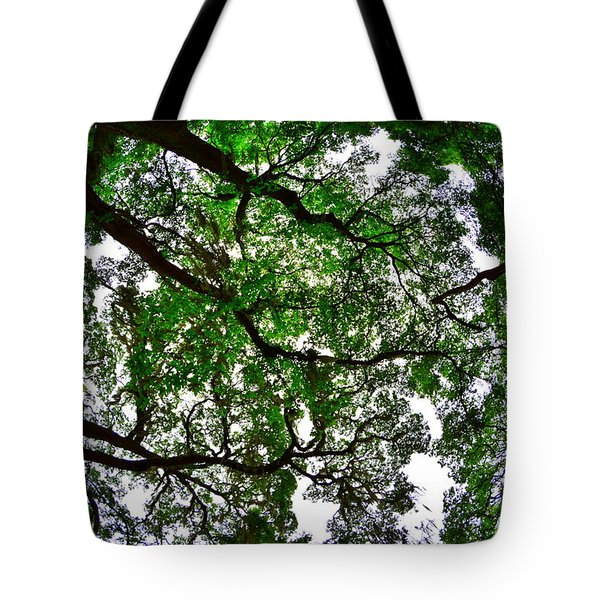 Looking Up The Oaks Tote Bag
