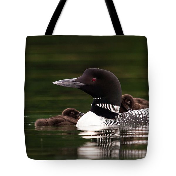 Loon Chicks Tote Bag