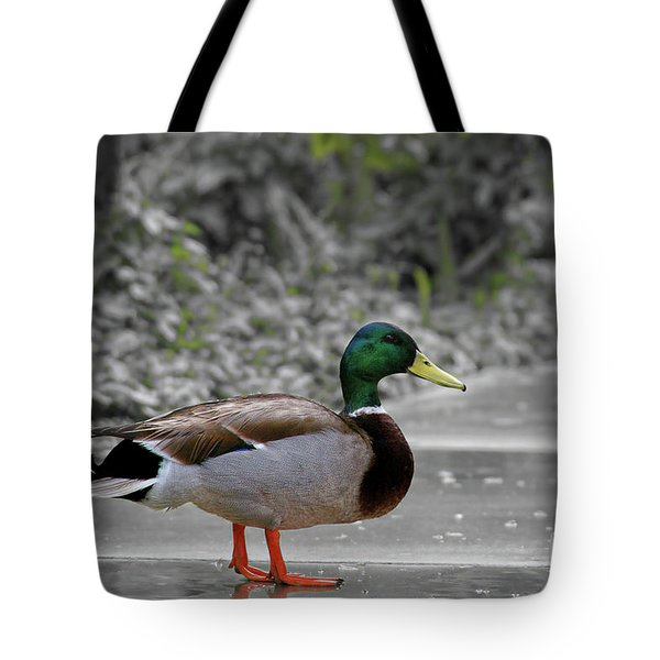Tote Bag featuring the photograph Lost Duck by Mariola Bitner