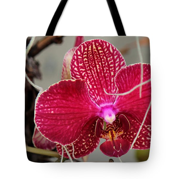 Tote Bag featuring the photograph Lost In The Jungle by Silke Brubaker