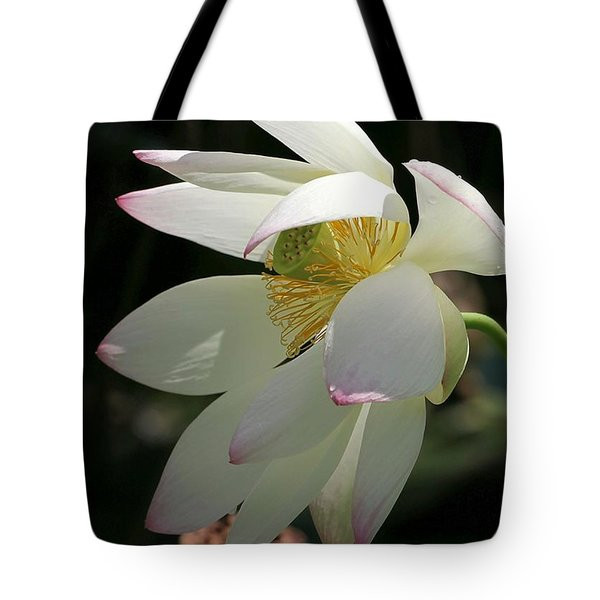 Lotus Under Cover Tote Bag by Sabrina L Ryan