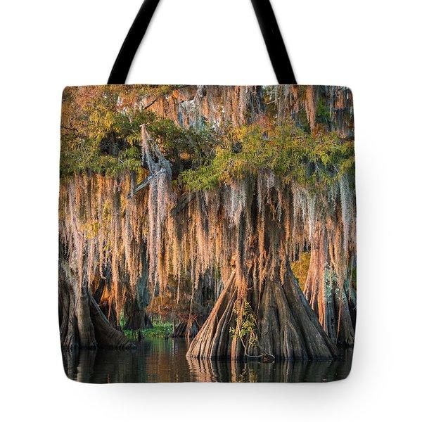 Louisiana Swamp Giant Bald Cypress Trees Two Tote Bag