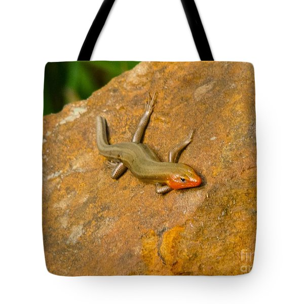 Lounging Lizard Tote Bag by Rand Herron