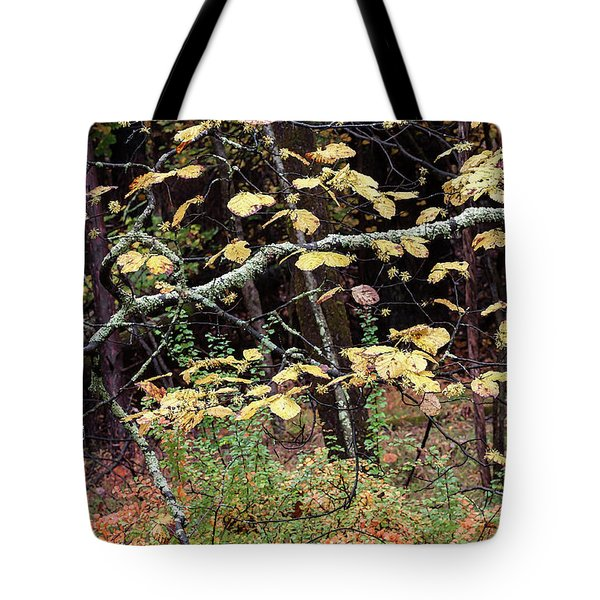 Lovely Autumn Witch Hazel -   Tote Bag