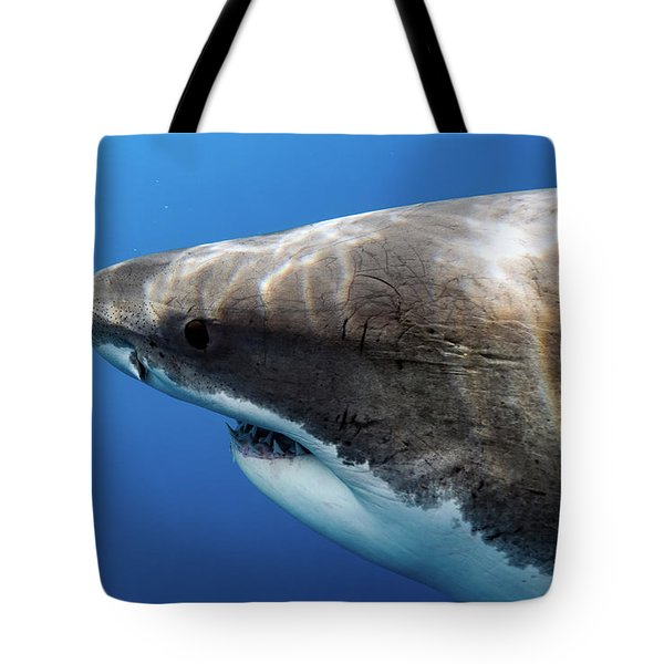 Lucy's Profile Tote Bag by Shane Linke