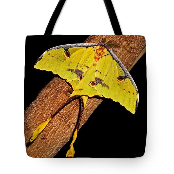 Tote Bag featuring the photograph Luna Moth by Judy Vincent