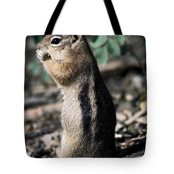 Lunchtime For Ground Squirrel Tote Bag by Sally Weigand