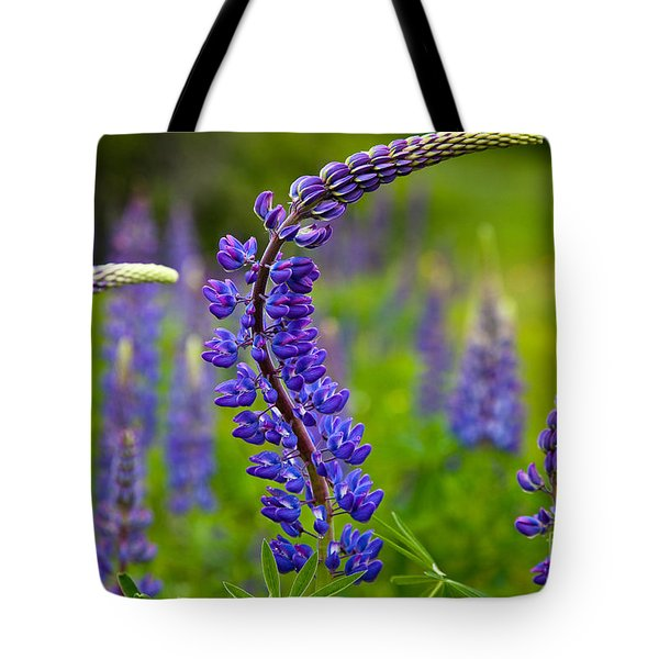 Lupine Curves Tote Bag