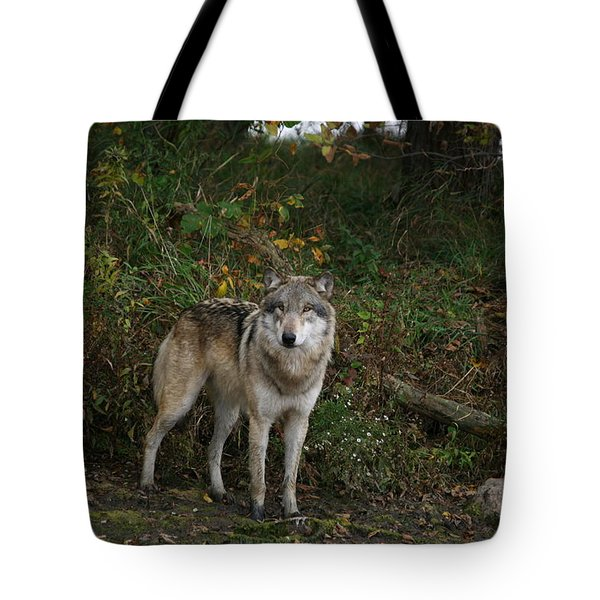 Tote Bag featuring the photograph Lupine Pose by Shari Jardina