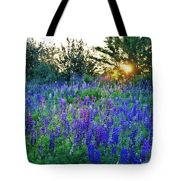 Lupins In The Sunbeam Tote Bag
