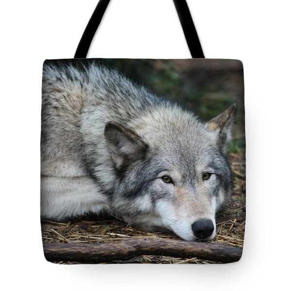 Tote Bag featuring the photograph Lying In Wait by Laddie Halupa
