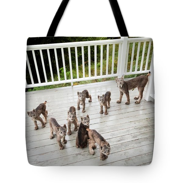 Lynx Family Portrait Tote Bag
