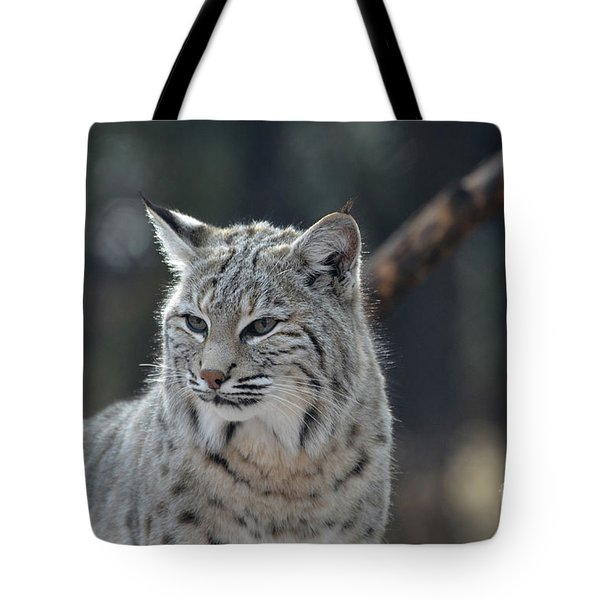 Lynx With A Very Unhappy Face Tote Bag