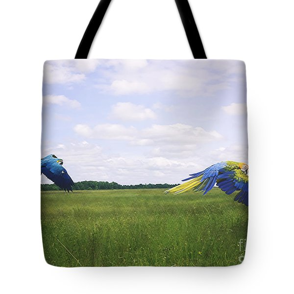Macaws Flying Together Tote Bag by Melissa Messick