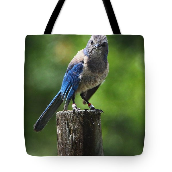 Mad Bird Tote Bag