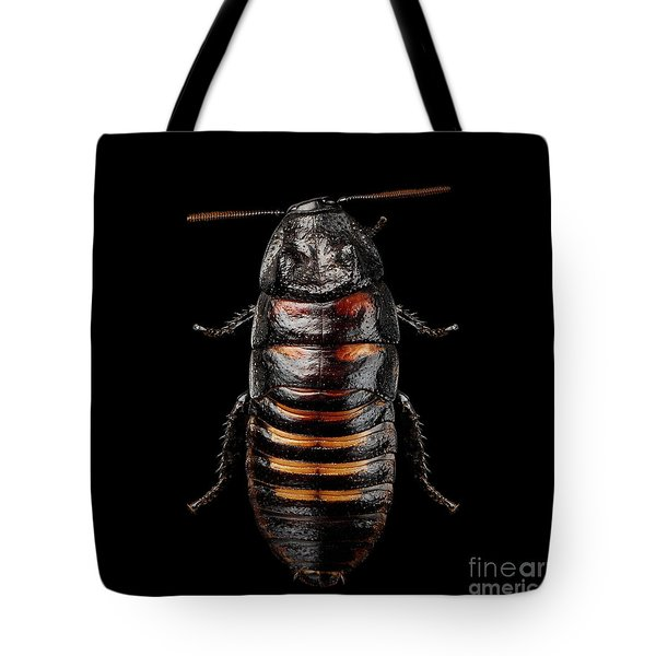 Madagascar Hissing Cockroach Tote Bag