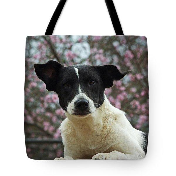 Madison In Spring Tote Bag