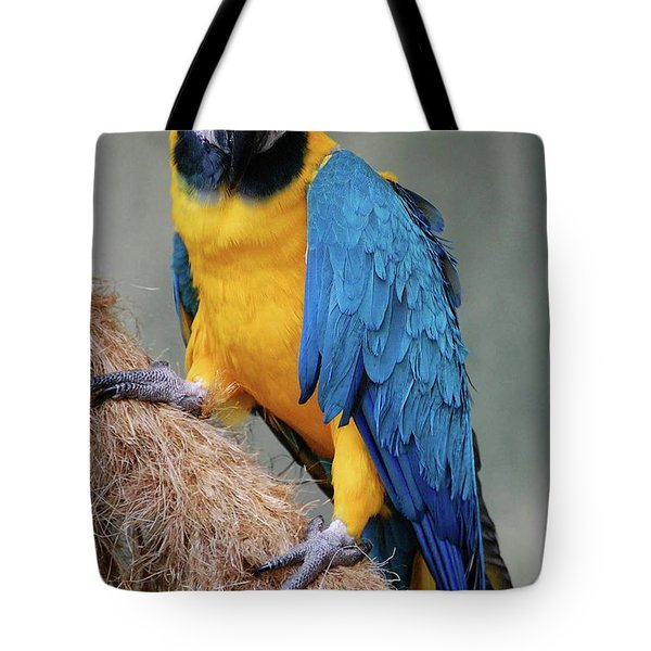 Magnificent Macaw Tote Bag