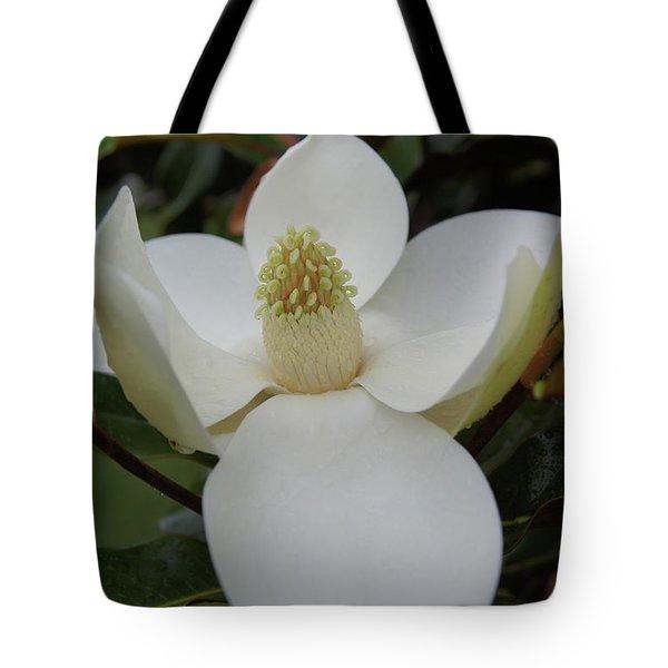 Magnolia Blossom 6 Tote Bag