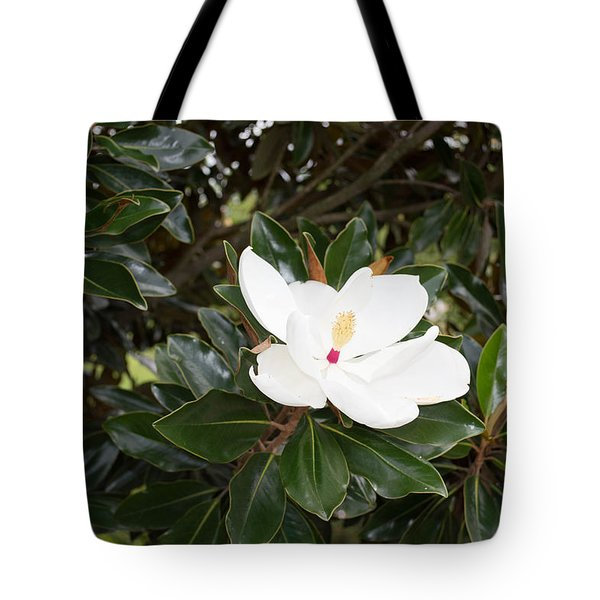 Tote Bag featuring the photograph Magnolia Blossom by Linda Geiger