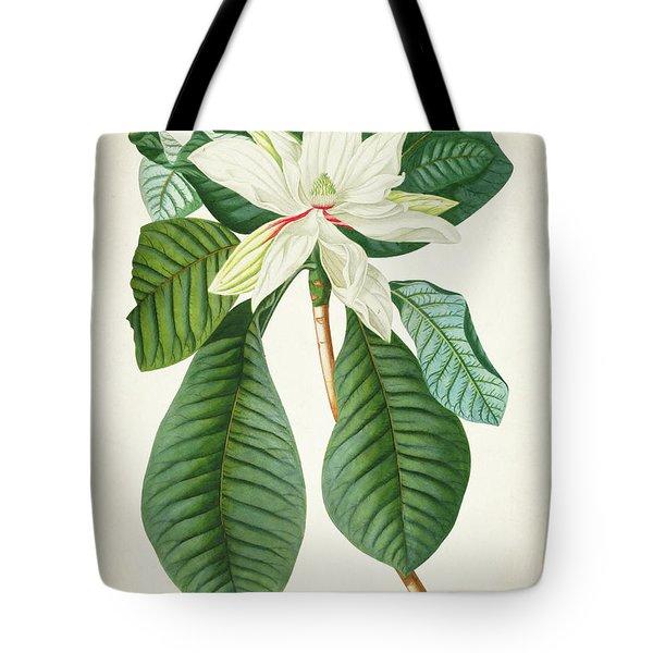 Magnolia Botanical Print Magnolia02 Tote Bag