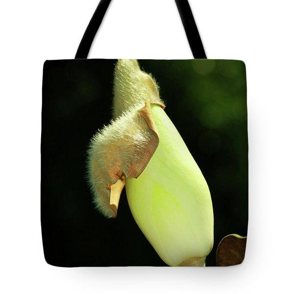 Magnolia Bud Tote Bag by Deborah Benoit