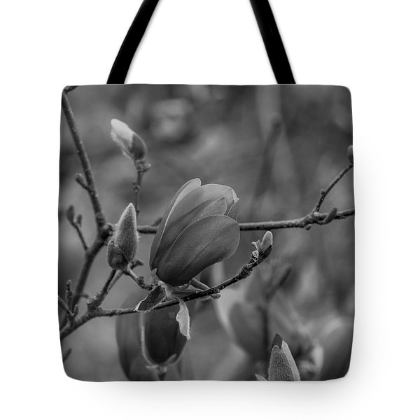 Magnolia Bw Blooms Buds Branches Tote Bag