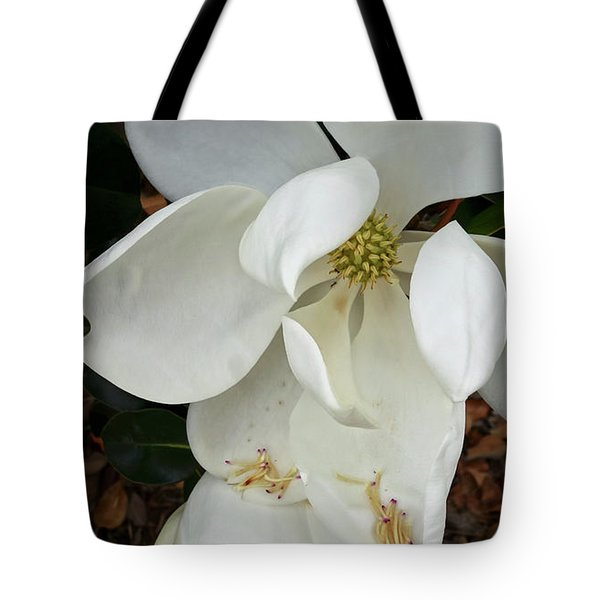 Magnolia Tote Bag by Matthew Bamberg