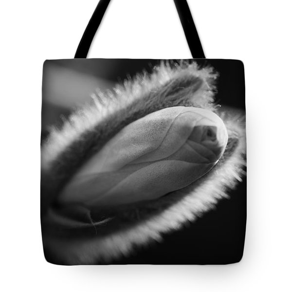 Tote Bag featuring the photograph Magnolia Stellata Bud by Keith Elliott