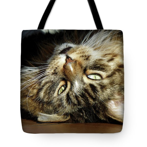 Tote Bag featuring the photograph Main Coon, Crazy. by Roger Bester