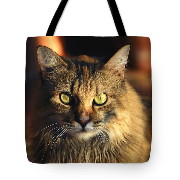 Main Coone Tote Bag by David Lee Thompson