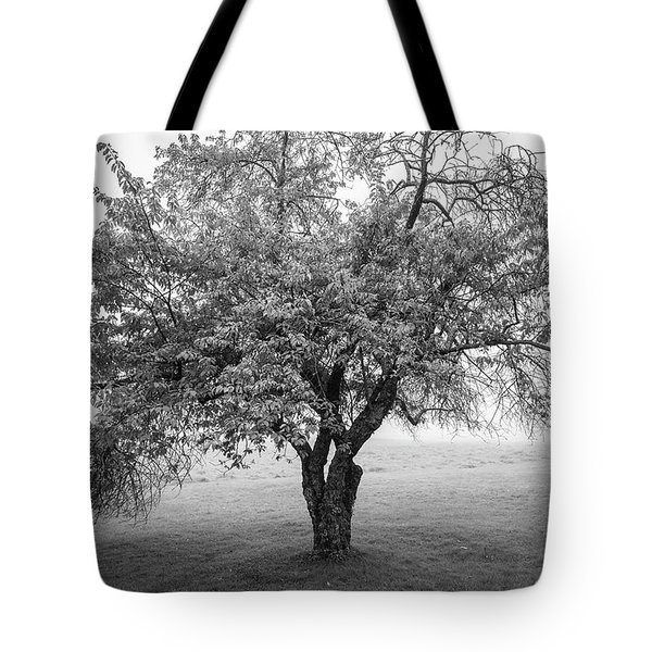 Tote Bag featuring the photograph Maine Apple Tree In Fog by Ranjay Mitra