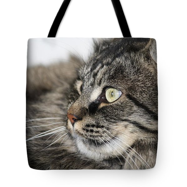 Maine Coon Cat Tote Bag by Mary-Lee Sanders