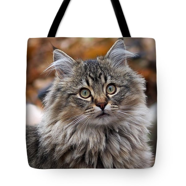Tote Bag featuring the photograph Maine Coon Cat by Rona Black