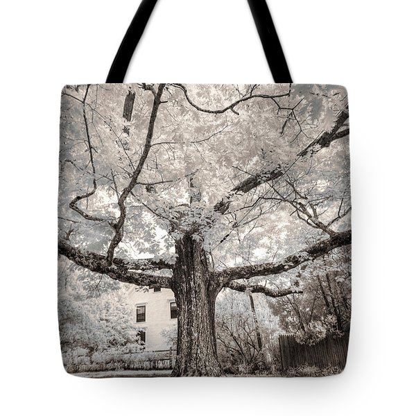Tote Bag featuring the photograph Maine Neighborhood Tree by Craig J Satterlee
