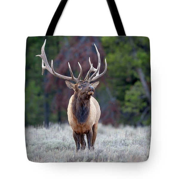 Majestic Bull Elk Tote Bag by Jack Bell