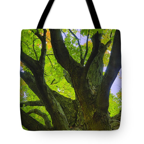 Tote Bag featuring the photograph Majestic Maple 2 by Gary Hall