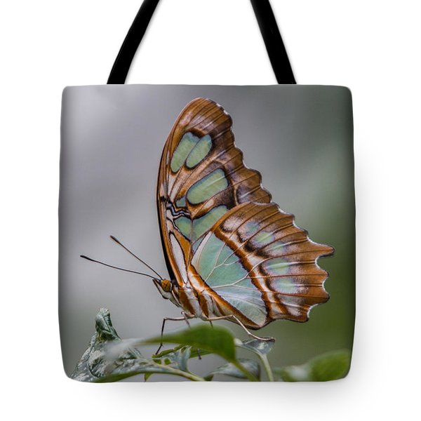 Malachite Butterfly Profile Tote Bag by Patti Deters