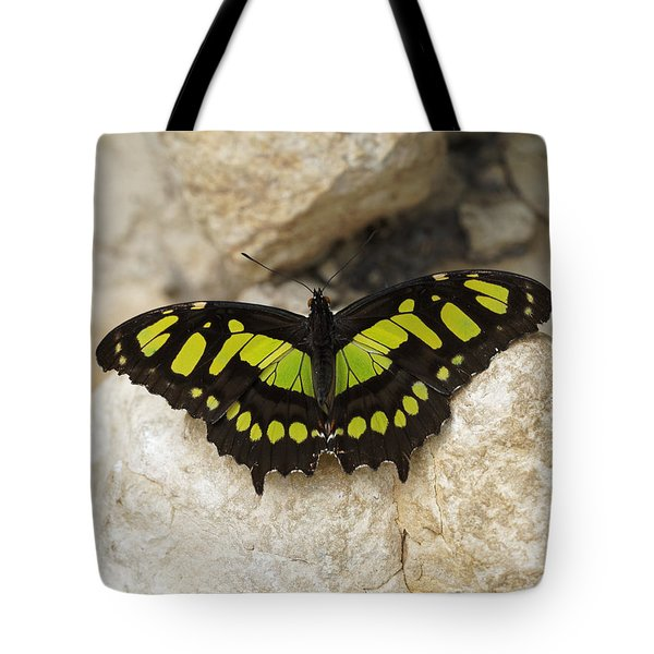 Tote Bag featuring the photograph Malachite Butterfly - Siproeta Stelenes by Paul Gulliver